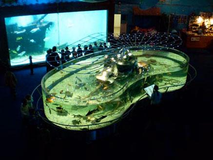Mořský-svět-Akvárium-ve-tvaru-ledviny