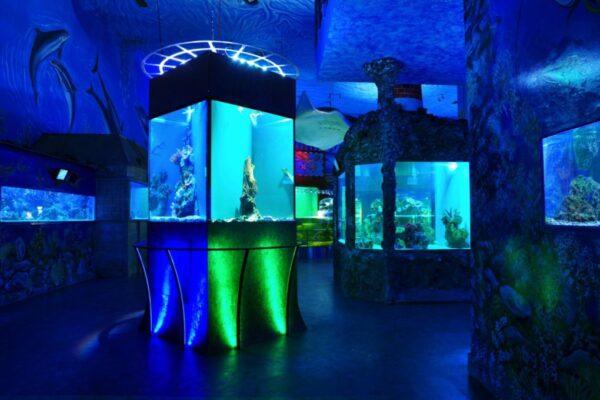 Mořský-svět-Slané-a-sladkovodní-akvárium-napůl-1024x680